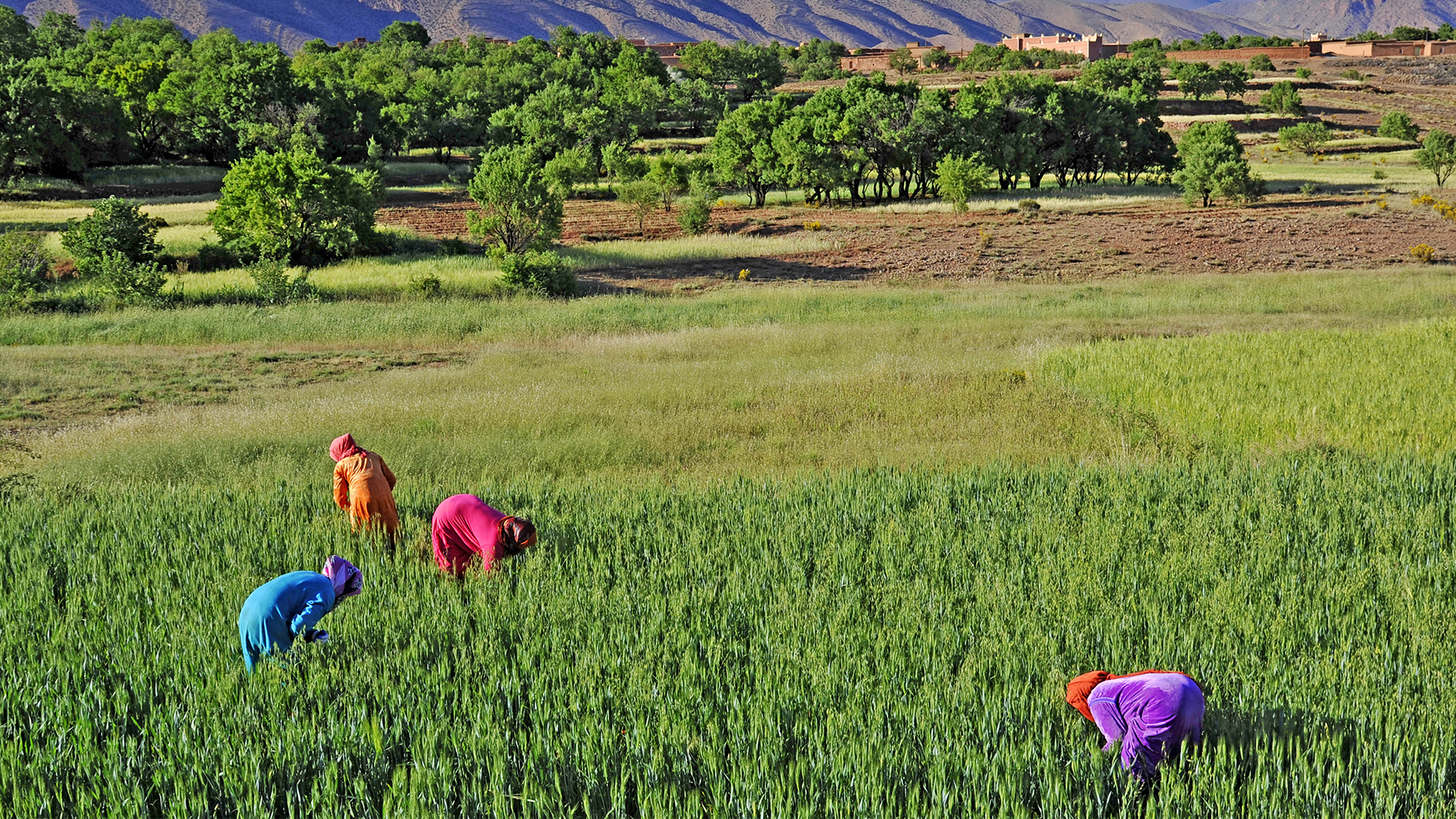 Women farming the fields in Morocco