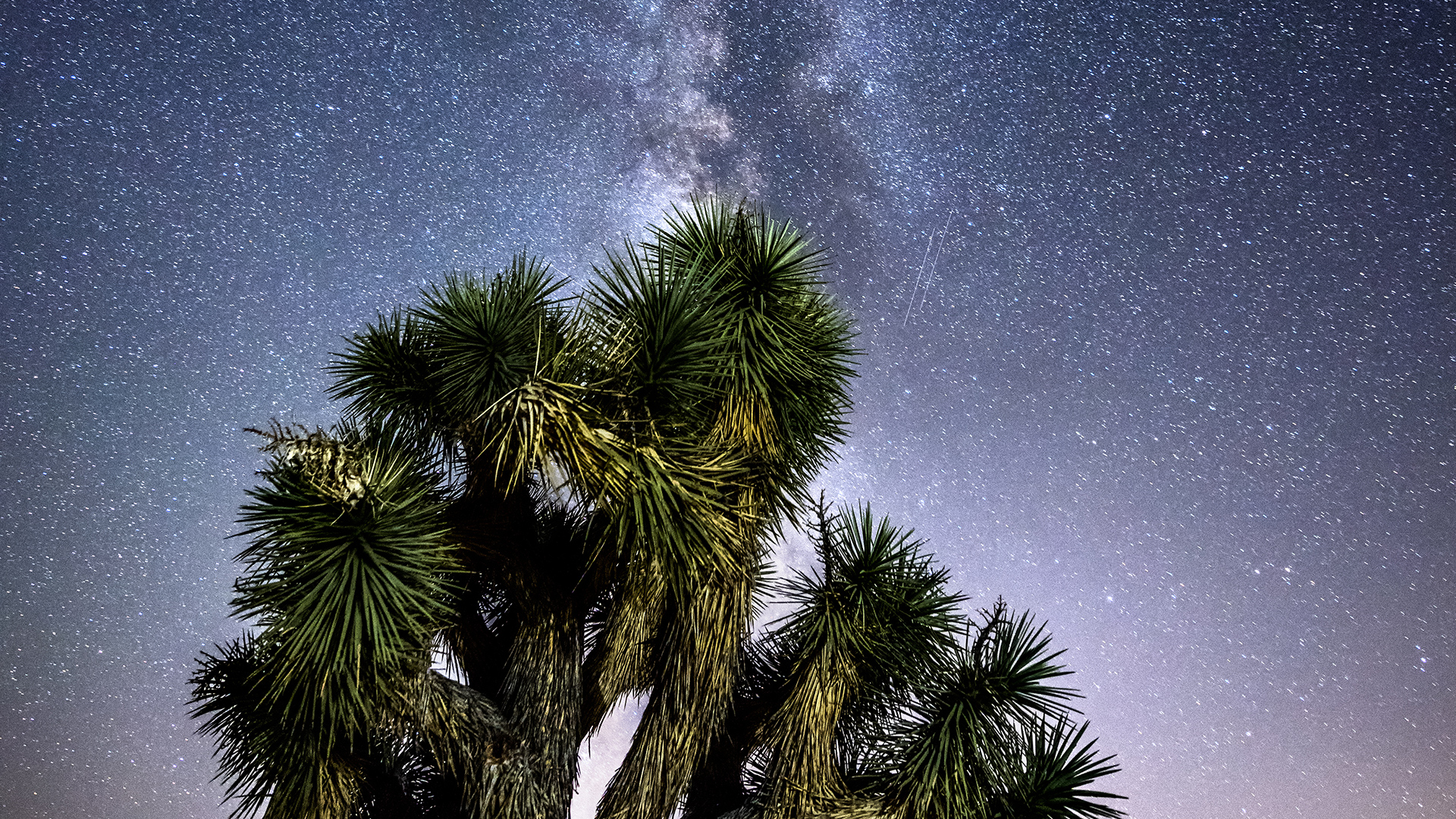 Milky Way view above a Joshua tree